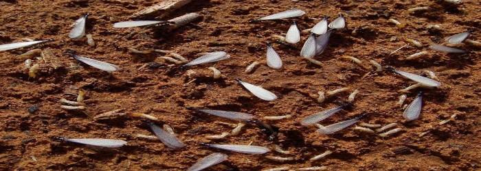 Anti Termite treatment