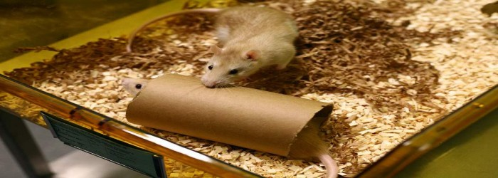pest control for rats in mumbai