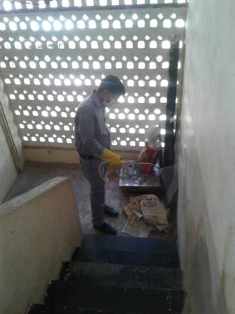 Spray pest control in Staircase