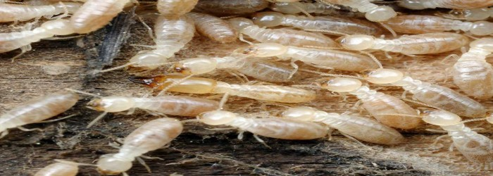 termite treatment in mumbai